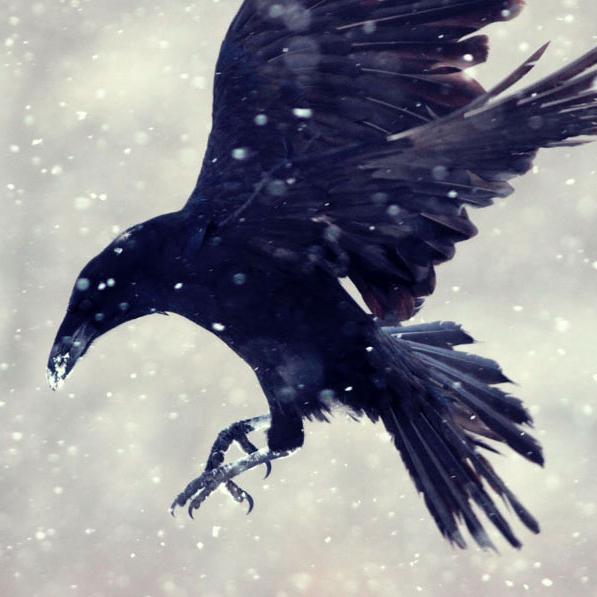 Schim bekroond met een White Raven