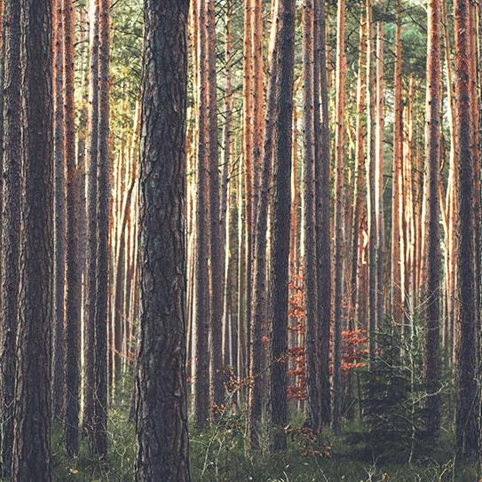Een bos